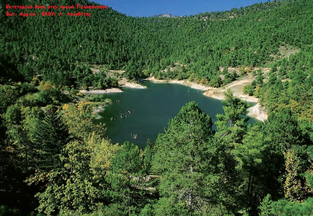 Εκτεταμένα δάση στην ορεινή Πελοπόννησο - Φωτ. Αρχείο ΕΚΒΥ/Λ. Λογοθέτης